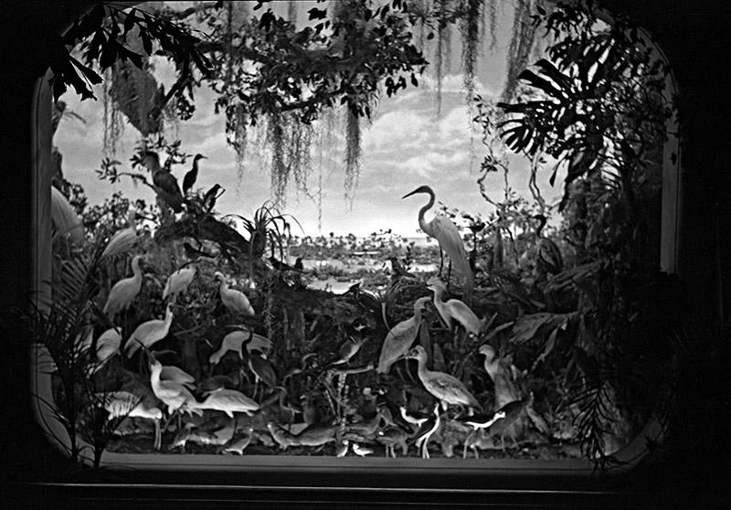 florida-bird-diorama.jpg