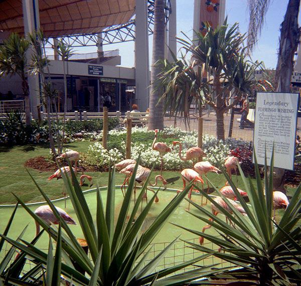 flamingo-1.jpg